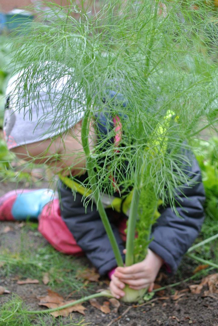 GemüseAckerdemie
