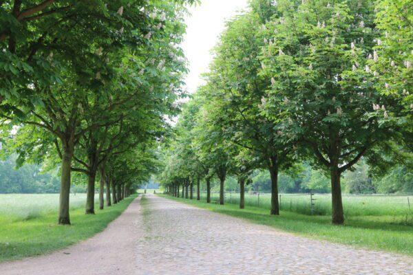 Enjoy Leipzig's green side