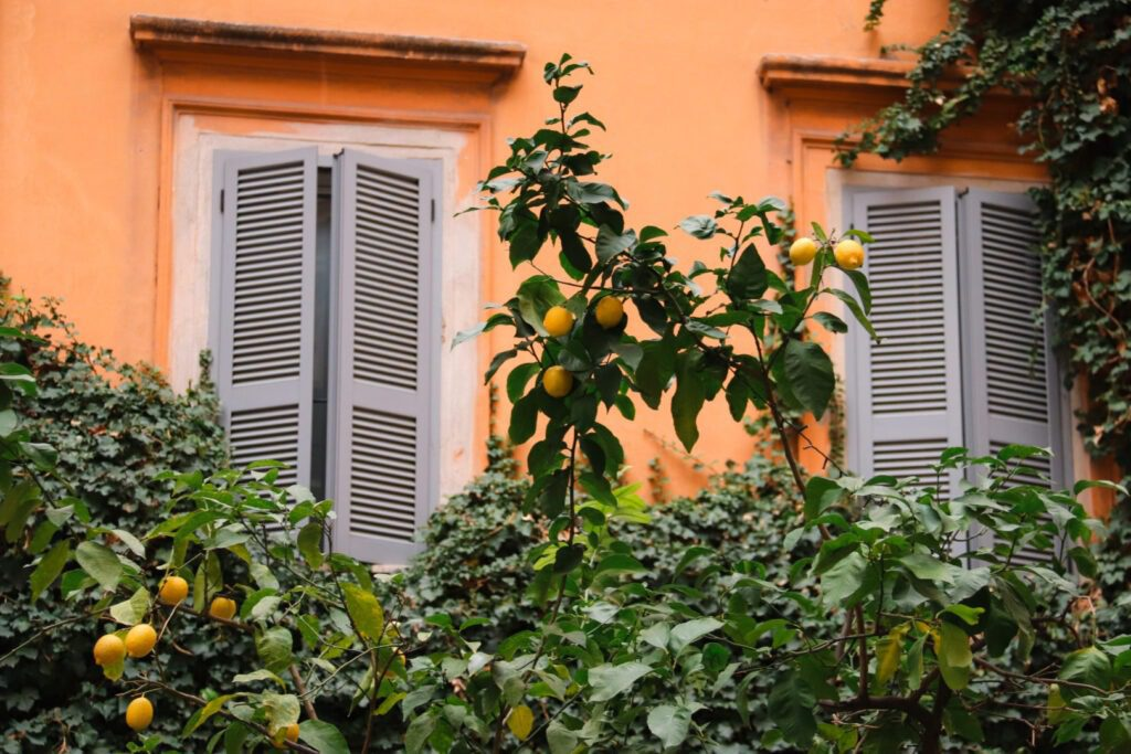 Lemon Tree, Rome in Winter